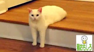 【猫 おもしろ】 - 猫 面白い 鳴き声 ================================...