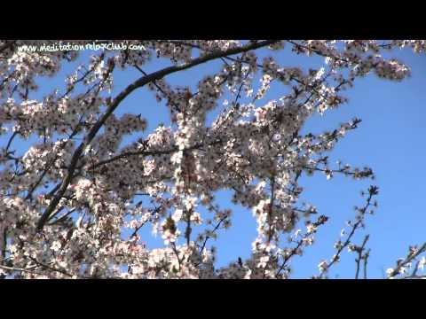 Spring Song: Relaxing Instrumental Nature Sounds Music Therapy