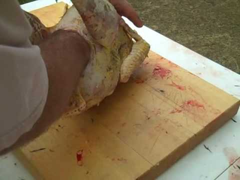 Cleaning the inside of a Turkey
