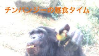 チンパンジーの昼食タイム ガラスに貼り付けた果物を取って食べるときの...
