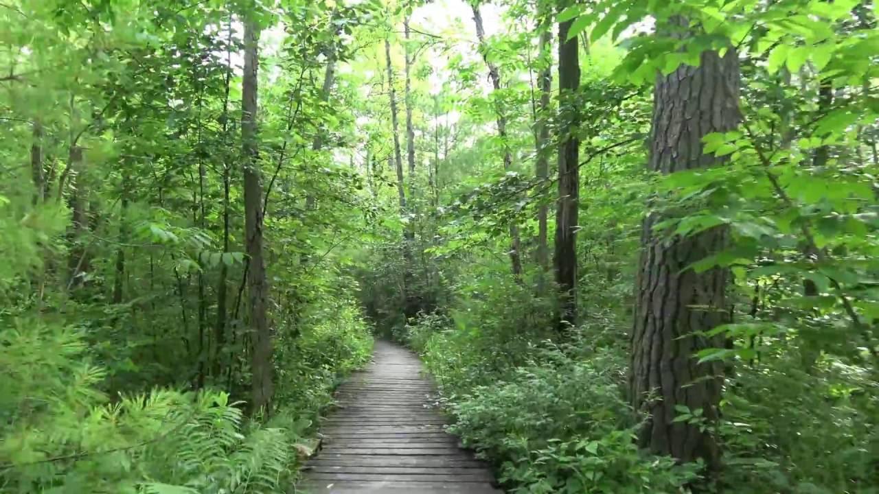 nature walk trail long lake