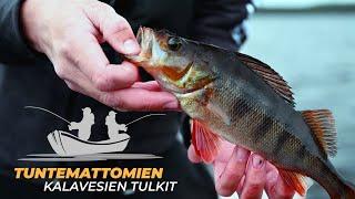 Tuntemattomien kalavesien tulkit: Osa 2, kilpailu alkaa