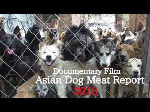 Asian Dog Meat Report【Documentary Film】English Version(2018/123min/Japan)