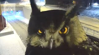 「あら、アタシも見られちゃってるの?」交通監視カメラを覗き込む夜のフクロウ