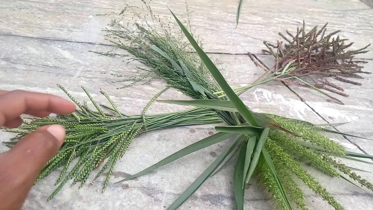 Tipos de sementes de capim que dou para meus coleiros for Tipos de estanques para acuicultura
