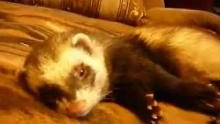 Richie, the polecat /Риччи, просыпайся!