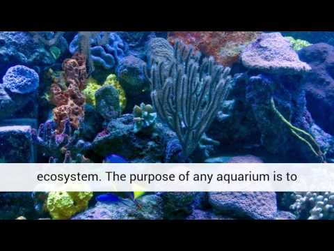 Saltwater Aquarium Plants What They're About... video 4