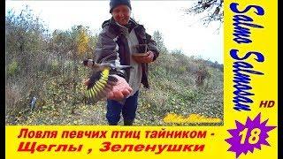 Ловля певчих птиц тайником - Щеглы , Зеленушки - 18 часть.