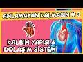Anlamayan Kalmasın #3 Kalbin Yapısı ve Dolaşım Sistemi