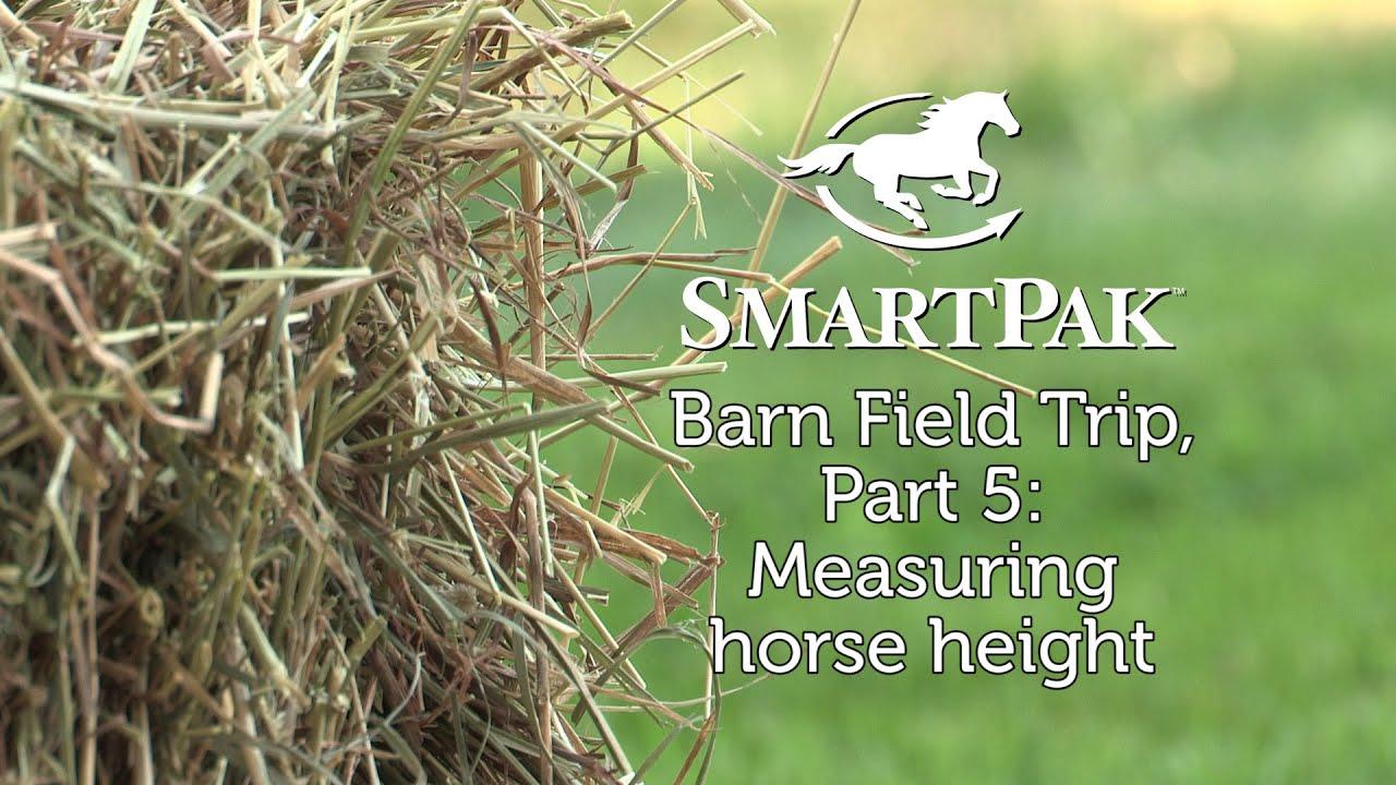 Smartpak Barn Field Trip Part 5 Measuring Horse Height