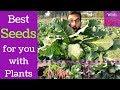 Seeds For Exotic Plants | Plants Seeds Online | Best Quality Seeds | Vegetable Seeds