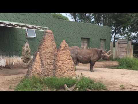 ITZ Classic: Racine Zoo Visit 2017