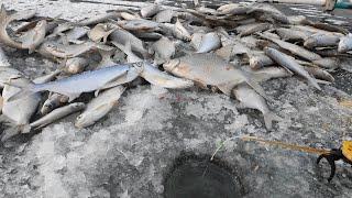 Это ЖОР КЛЮЕТ НЕ ДАЕТ ОПУСТИТЬ Зимняя рыбалка на удочки