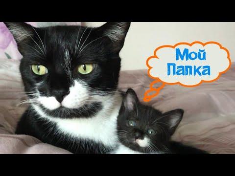 Как кот стал приемным за 10 декабря