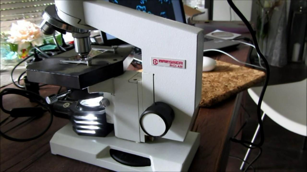 Dunkelfeld mikroskop unter euro bresser biolam youtube