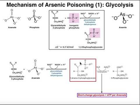 Drugs & Xenobiotics | Mechanisms Of Arsenic Poisoning