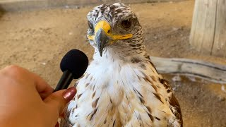 I interviewed animals with a tiny mic again