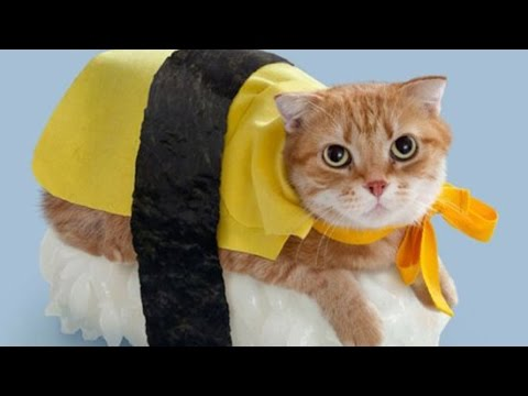 Simon Conway - Halloween is coming so here's 42 Cats in ridiculous costumes!