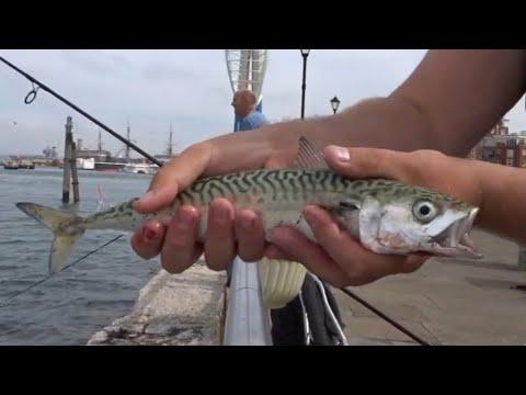 Bass & Mackerel Fishing