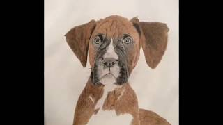Drawing a boxer dog - Photo stages