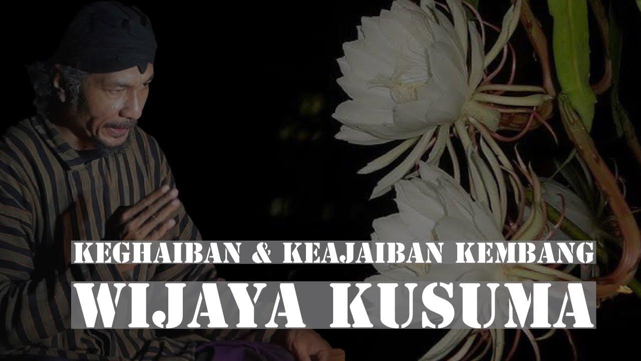 Download Keajaiban & Keghaiban Kembang Wijaya Kusuma
