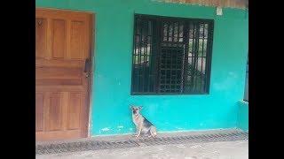 Из-за переезда люди бросили беременную собаку. Она целый месяц сидела возле двери!
