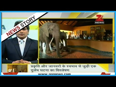 DNA: This family of Elephants takes annual vacations in Zambia hotel!