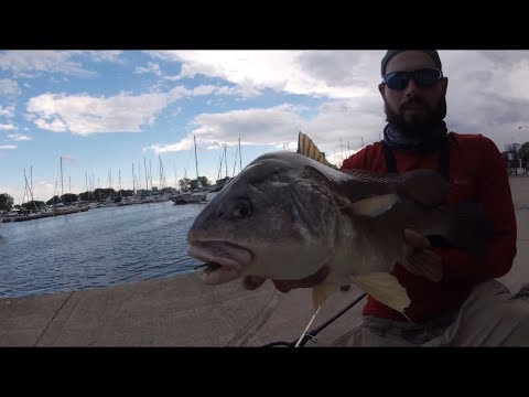 2019 Sight Fishing Freshwater Drum Montrose Harbor Chicago Il Lake Michigan
