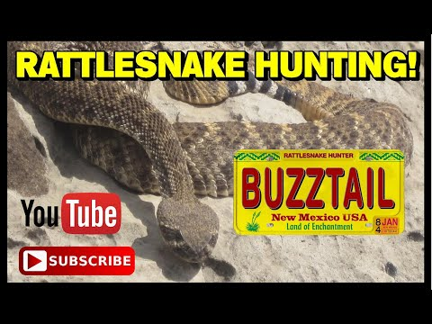 RATTLESNAKE HUNTING IN NEW MEXICO with Caesar