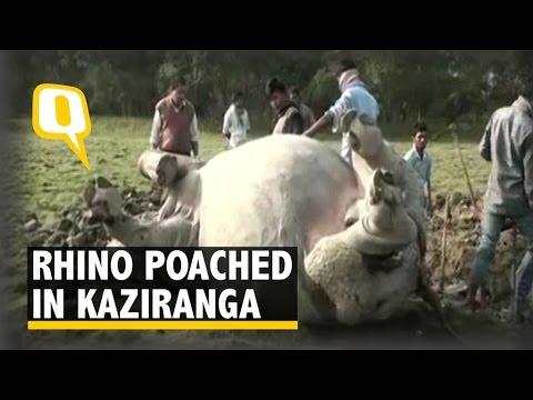 Rhino Poached in the Kaziranga National Park