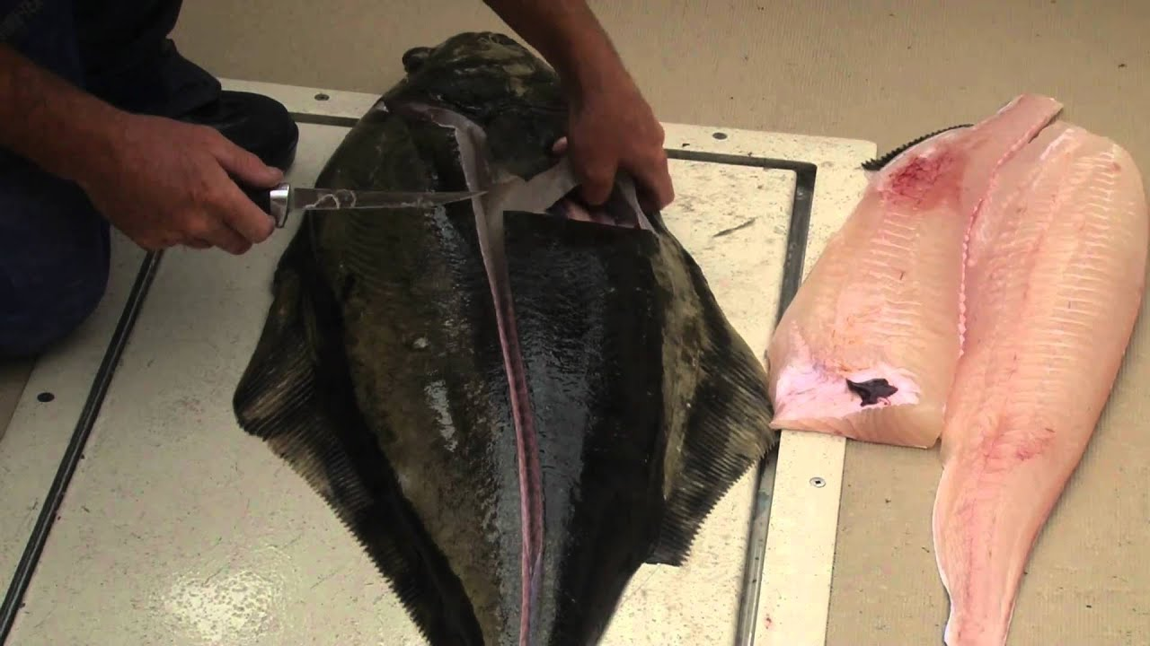 How To Fillet A Halibut Youtube