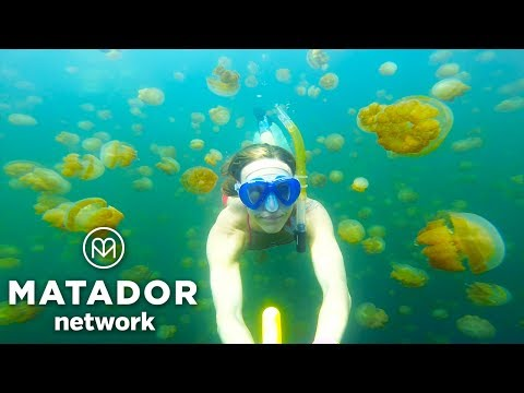 Magic Spot: Jellyfish Lake, Palau