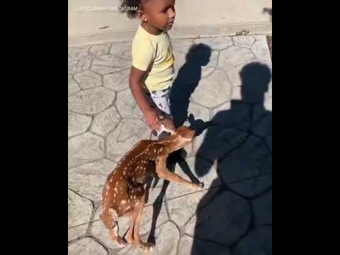 Mark and April - The Fawn Whisperer....the cutest thing ever!