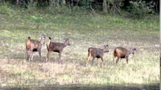Periyar Wildlife Sanctuary in Kerala India 2011 -  8 of 14