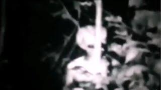Alien Spukt im Wald 👽 😱