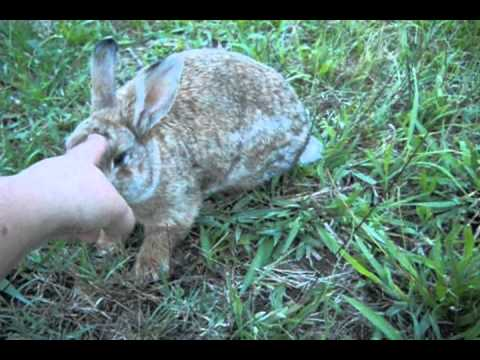 How to touch a wild rabbit