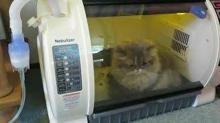 15 04 25 Nebulizing, starring Persian kitty, Mariah