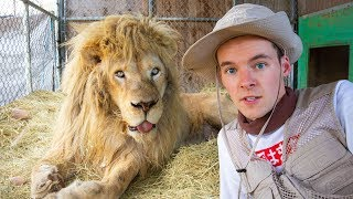 I TAMED A LION!!