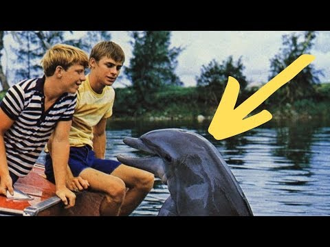 The Dark Fate Of 'Flipper The Dolphin' Is Now Coming To Light And People Are Up In Arms