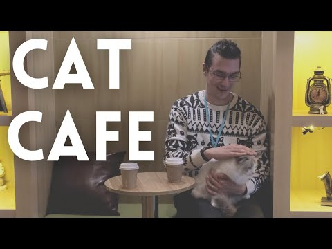 Cat Cafe in Shanghai   Playing with Lots of Cute Cats in China   Shanghai Life Feb 2021