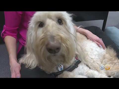 Las Vegas Teacher Has Therapy Dog For Students