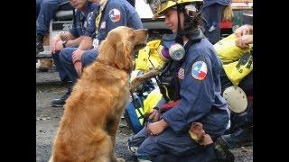 Mission Manager-sponsored 2014 Sar Hero Dog