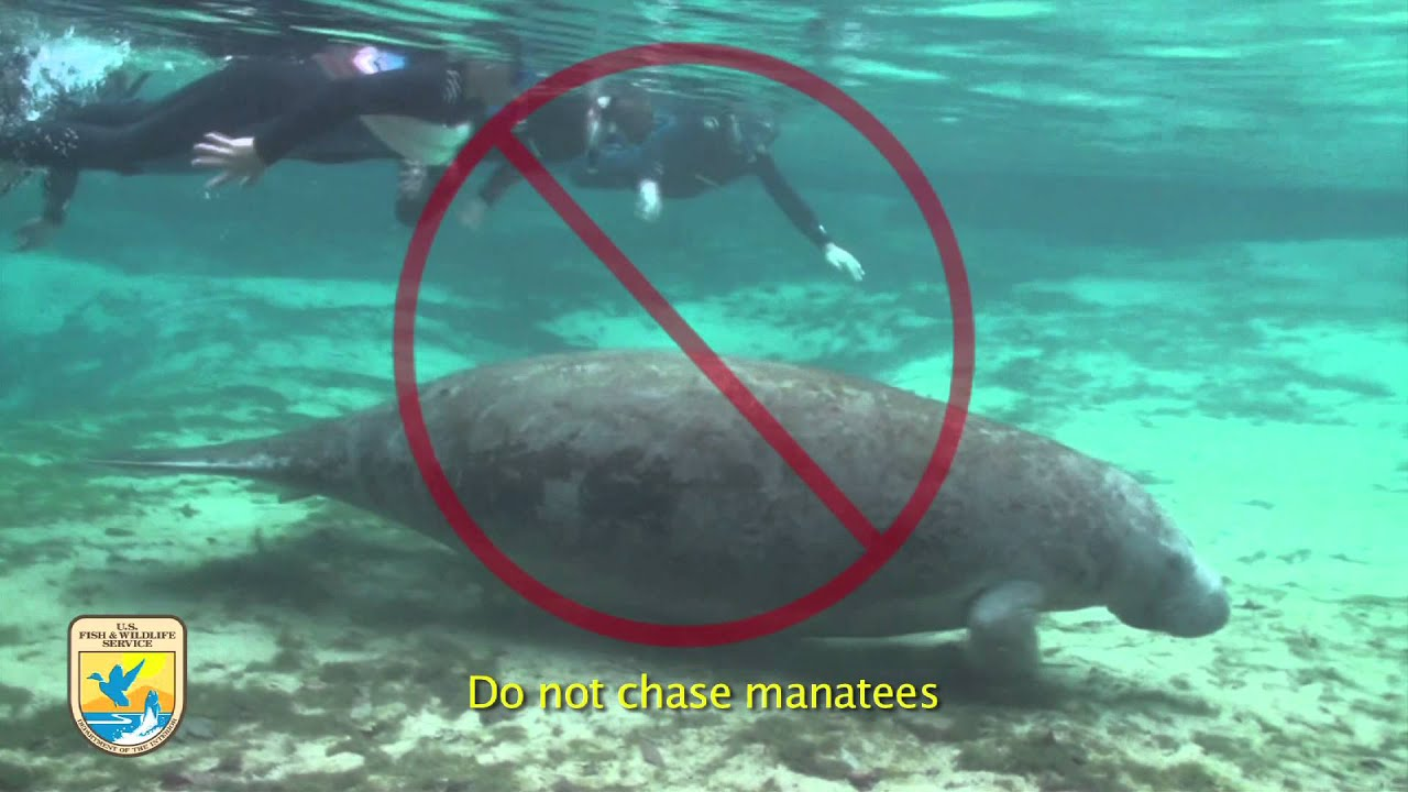 Swim with Manatees and Tour the River