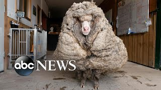 An oversized sheep coat, vaccine lines, Texas struggles: World in Photos, Feb. 25