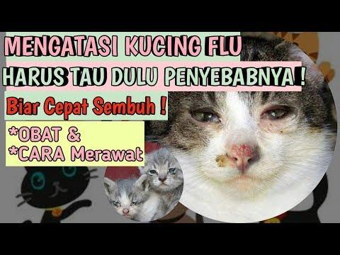 ciri-kucing-flu-dan-cara-mengatasi-kucing-flu-berat-tips-memelihara-kucing