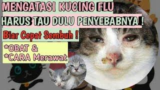 CIRI KUCING FLU DAN CARA MENGATASI KUCING FLU BERAT   Tips memelihara kucing