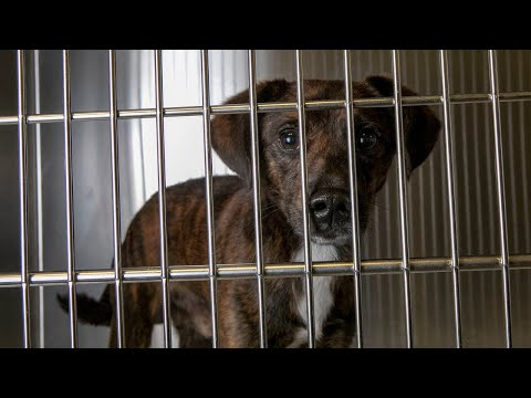 Miami-Dade Animal Shelter Is Overpopulated, Says Adopt Now