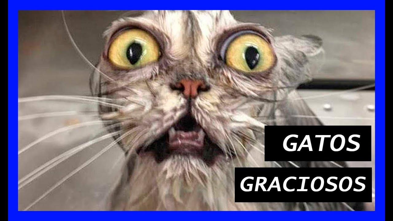 Gatos Graciosos Los Mejores Videos De Gatos Chistosos