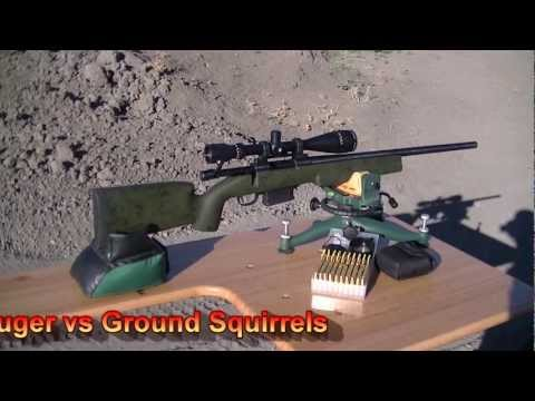 Ground Squirrel Hunt July 2012; Sage Rats