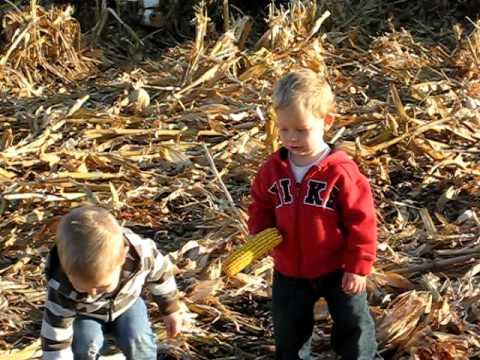farm boys, harvest in nebraska